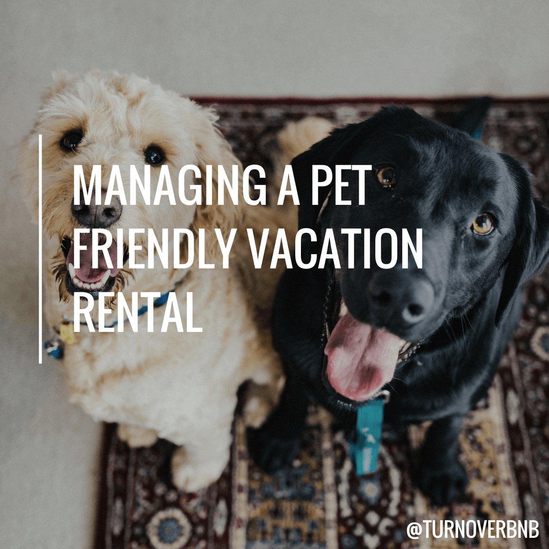 pictures How to Have a Pet Friendly Vacation